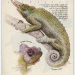 Chameleon a žluťásek